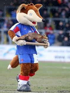 Carlisle United - Olga the Fox. Carlisle United, Sports Advertising, Fox, Teddy Bear, Football, Animals, English, Club, Soccer