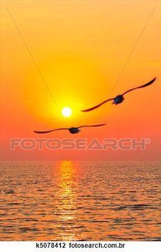 voando, pássaros, com, pôr do sol Ampliar Foto