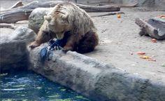 our zoo de budapest