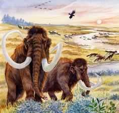 The woolly mammoth, gray wolf and reindeer were among the inhabitants of the Brecks in the Devensian Glaciation of the last Ice Age by Beverly Curl