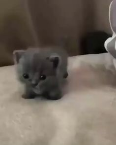 Nothing cuter than tiny baby kitties. Nothing cuter than tiny baby kitties. Cute Baby Cats, Cute Cat Gif, Cute Little Animals, Cute Cats And Kittens, Cute Funny Animals, I Love Cats, Kittens Cutest, Baby Kitty, Cute Pets