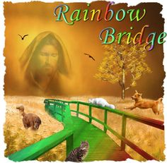 Animal Quotes, Animal Rights & Religions's photo: Rainbow Bridge. Just this side of heaven is a place called Rainbow Bridge.  When an animal dies that has been especially close to someone here, that pet goes to Rainbow Bridge.  There are meadows and hills for all of our special friends so they can run and play together... read more> www.facebook.com/photo.php?fbid=590635514304367=a.147411838626739.24850.147403671960889=1_count=1=nf