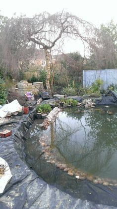 More planting in my pond