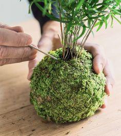 Kokedama, ça vous parle ? Comme au Japon, façonnez ces petites sphères de mousse, appelée kokedama, qui mettront vos plantes en valeur. Et décoreront votre intérieur d'une façon très naturelle !