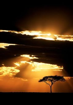 Acacia tree at sunset, Masai Mara, Kenya. I will hopefully see this in person some day Beautiful Sunset, Beautiful World, Beautiful Places, Beautiful Pictures, Out Of Africa, Wonders Of The World, Places To See, South Africa, Nature Photography