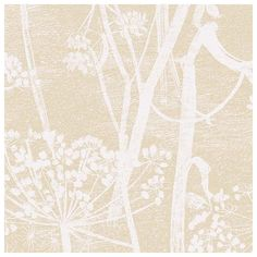 Papier peint - Cole and Son - Cow Parsley - Beige & White