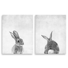 """Coco and James Animal Prints Baby Bunny Front and Back 2 Piece Paper Print Set Size: 20"""" H x 16"""" W"""