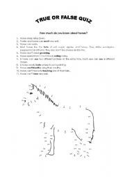 English teaching worksheets: The horse