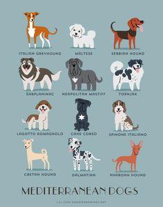 Tirage d'art Méditerranée chiens races de pays par doggiedrawings