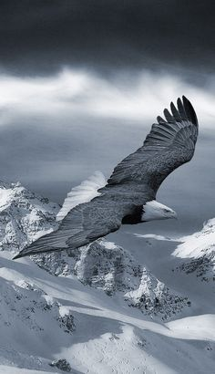 Soaring High Above a Winters Tale, Searching for A Winters Meal...
