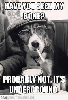 Hipster Dog, come on.. thats funny!