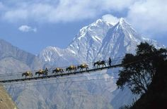 An hanging bridge on Kali Gandaki river  The Kali Gandaki or Gandaki River is one of the major rivers of Nepal and a left bank tributary of the Ganges in India.  http://www.himalayastrek.com/upper-mustang-trekking.php