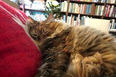 sleepy afternoon Cats, Animals, Gatos, Animales, Animaux, Animal, Cat, Animais, Kitty