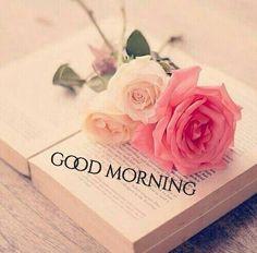 Gd Morning, Good Morning Roses, Good Morning Texts, Good Morning Picture, Good Morning Messages, Good Morning Good Night, Morning Pictures, Morning Wish, Good Morning Images
