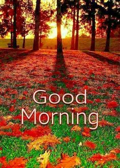 In today's post, we are presenting good morning msg. If you are searching for good morning msg you are welcome to our website. Good Morning Beautiful Pictures, Good Morning Nature, Good Morning Sister, Latest Good Morning Images, Good Morning Beautiful Quotes, Good Morning Thursday, Good Morning Images Download, Good Morning Gif, Good Morning Flowers
