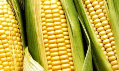 US Corn Futures Rise to Two-Month High on Mounting Demand from ...