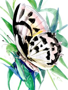 BUtterfly art, Original Watercolor painting by ORIGINALONLY on Etsy Watercolor Paper, Watercolor Paintings, Pink Cockatoo, Eco Friendly Paper, Butterfly Art, Love Birds, Blue Bird, Photo Art, Original Artwork