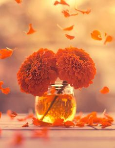 Uploaded by granmaster_by. Find images and videos about photography, flowers and orange on We Heart It - the app to get lost in what you love.