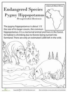 Fourth Grade Holidays & Seasons Worksheets: Endangered Species: Pygmy Hippo Endangered Animals Lessons, Nocturnal Animals, Extinct Animals, Animal Activities For Kids, Earth Day Crafts, Summer Reading Program, Animal Habitats, Animal Facts, Project Based Learning