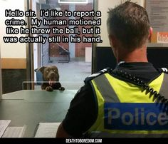 Funny Animal Photos for the Animal Lover Funny Animal Clips, Funny Animal Photos, Funny Animal Memes, Dog Memes, Memes Humor, Funny Dogs, Funny Pictures, Funny Memes, Animal Pics