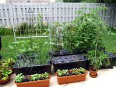 These 5 Self-Watering Planters Make Vegetable Gardening Easy : TreeHugger Self Watering Containers, Self Watering Planter, Container Gardening, Gardening Tips, Vegetable Gardening, Easy Garden, Lawn And Garden, Garden Pond, Gutter Garden