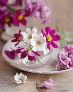 Good Morning Beautiful Flowers, Beautiful Roses, Love Rose Flower, Flower Art, Paper Flowers Craft, Flower Crafts, Beautiful Flowers Wallpapers, Rose Pictures, Beautiful Flower Arrangements