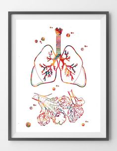 Lungs and alveoli watercolor print alveolar respiratory system poster anatomy art print Human Physiology Respiration medical art wall poster [401]. Sizes: 12x16, 16x20, 18x24, 24x36 Packed for shippin