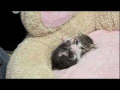 Grooming Kitten VIDEO - visit website to watch