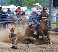 Senior Pro Rodeo rides into fairgrounds