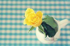 Yellow rose against turquoise Orange Flowers, Yellow Roses, Fresh Flowers, Pretty Flowers, Happy Flowers, Yellow Cottage, Rose Cottage, My Flower, Flower Power