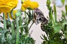 il solletico nel cuore: Buon inizio primavera a tutti ed auguri al mio Amo... Happy Spring, Garden, Plants, Blog, Spring, Garten, Gardens, Planters, Tuin