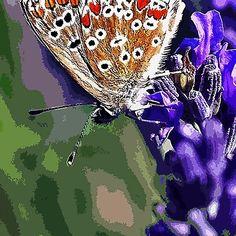 Papillons paint (little butterfly) - Butterflies  2 (c)(h) Kodak z1285  by Olao-Olavia / Okaio Créations 2013