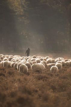 In het begin van het boek is Santiago, de hoofdrol, een schaapsherder. Zijn vader wou eerst dat hij priester werd maar Santiago wou reizen: daarom werd hij herder. Wanneer hij zijn schapen achterlaat om zijn schat te gaan zoeken, heeft hij soms spijt dat hij zijn schapen achtergelaten heeft.                                    …