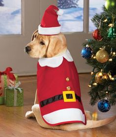 Christmas Santa Suit Cape Pet Costume Medium >>> Remarkable product available now. : Costumes for dog Christmas Animals, Christmas Dog, Dog Suit, Santa Suits, Dog Clothes Patterns, Holiday Costumes, Cat Sweaters, Pet Costumes, Pet Clothes