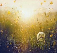 meadow by Sam V.
