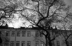 2014_March_Nikon-FA_Polypan-F_2048