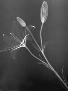 by Penny Nannini - MRI flowers