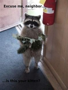 Excuse me neighbour.... is this your kitten?