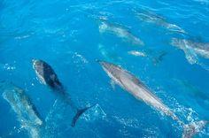 Dolphin Bay, Fernando de Noronha (PE)