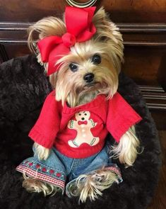 """Acquire wonderful tips on """"yorkshire terrier dogs"""". They are actually readily available for you on our website. Cute Little Puppies, Cute Baby Dogs, Cute Dogs And Puppies, Cute Little Animals, Cute Funny Animals, Yorkies, Yorkie Puppy, Yorkie Breeders, Pomeranian Dogs"""