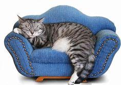 alternative alla psicoterapia....basta guardarlo! pinned with Pinvolve