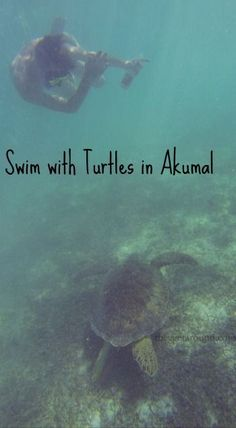 They Get Around | Swim With Turtles In Akumal | http://www.theygetaround.com…
