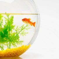 Feng Shui Fish for Wealth: All About the Feng Shui Aquarium