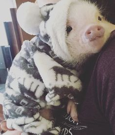 58 Adorable Animals To Help Get You Through The Day – Pig page – – Andreas Koch - Baby Animals Cute Baby Pigs, Cute Piglets, Baby Piglets, Cute Little Animals, Cute Funny Animals, Mini Pigs, Mini Teacup Pigs, Pet Pigs, Cute Creatures