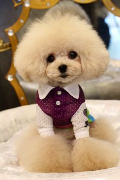 how to make poodle hair puffy