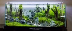 100 Aquascape Ideas meowlogy Hi Here we have best picture about aquarium aquascaping ideas. We wish these photos can be your light inspirat. Live Aquarium Plants, Home Aquarium, Nature Aquarium, Aquarium Design, Planted Aquarium, Live Plants, Aquarium Ideas, Betta Fish Tank, Aquarium Fish Tank
