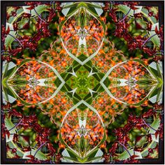 NZ native flax flower and foliage in square mandala design for textiles, fabric and more.
