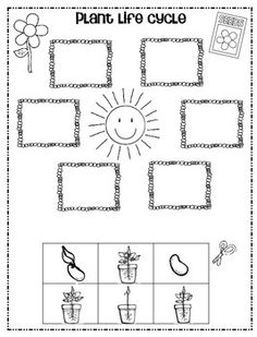 Plant...Life Cycle Freebie! by 1st Grade Hip Hip Hooray | Teachers Pay Teachers