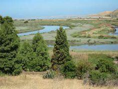 Tidelands Trail: dogs allowed.  Don Edwards S. F. Bay National Wildlife Refuge