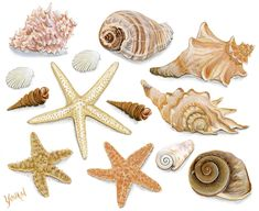 images of seashells | ... are all geared up for this wonderful hobby of collecting sea shells